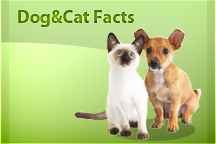 dog cat facts