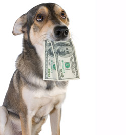 Dog-Eating-100-Dollar-Bills