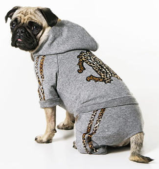 roberto cavalli dog clothes