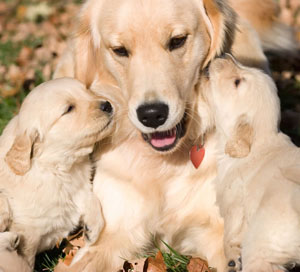 mother-and-her-puppies