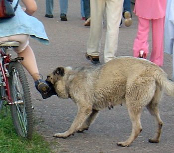 dog bite cyclists